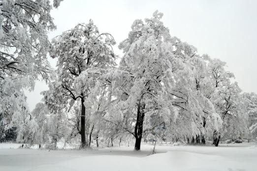 winter-488834_1920